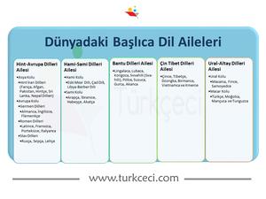 9.Sınıf Dillerin Sınıflandırılması